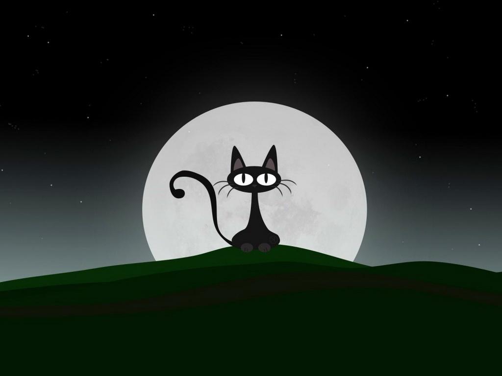 cats-53.jpg