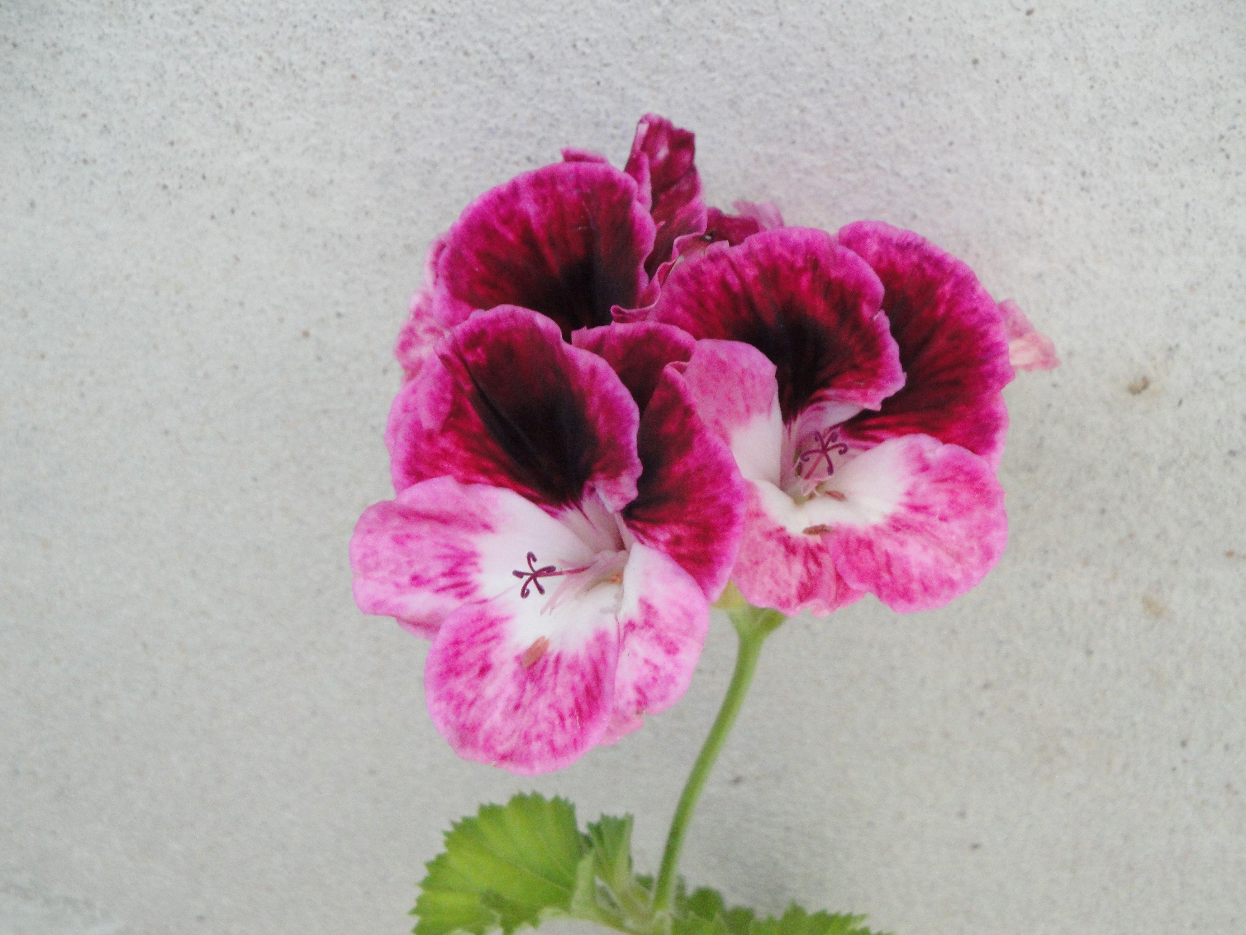 Flores de mi Jardín - Fotos propias