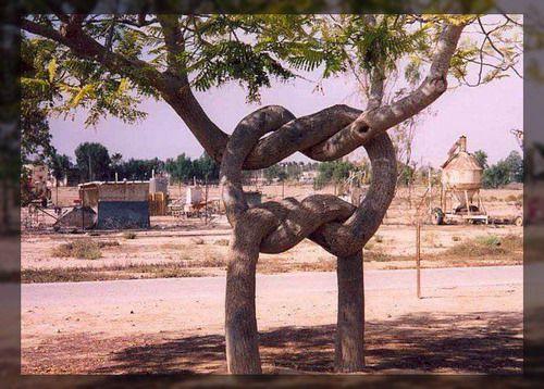 21 Июл Удивительные деревья.