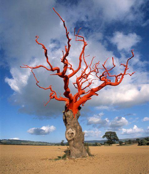 Просмотров: 459. наша Раша.  Распечатать.  Смешные фото. странные деревья.