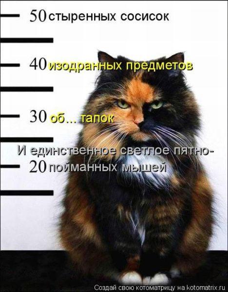 Кошачий триллер.