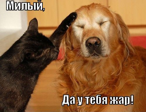 Рмешные котята картинки с надписями ...: www.futbolka-club.ru/kotenok-s-nadpisyami.html
