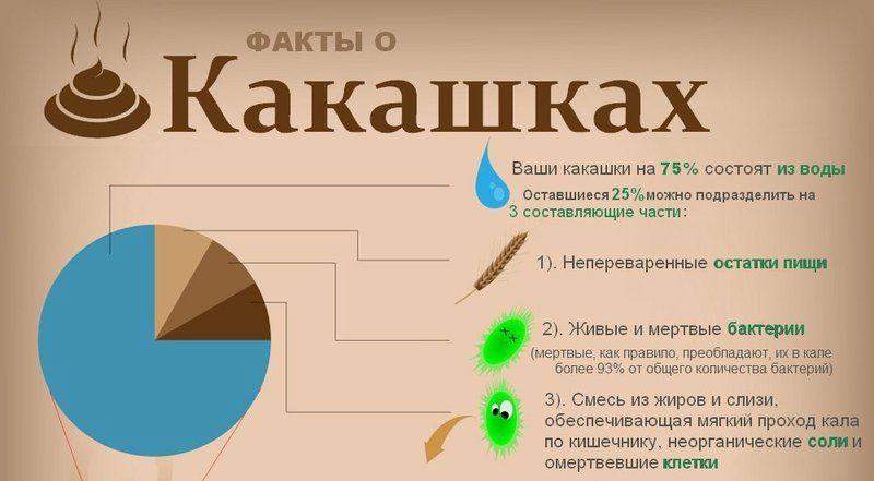 Факты о какашках