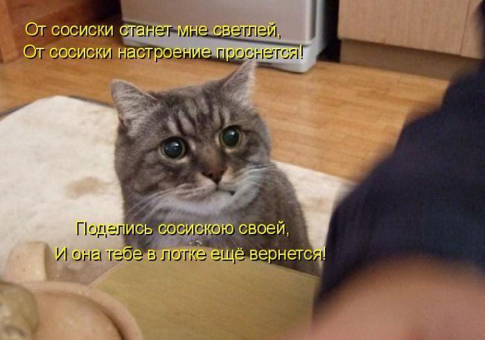 Лучшие котоматрицы недели