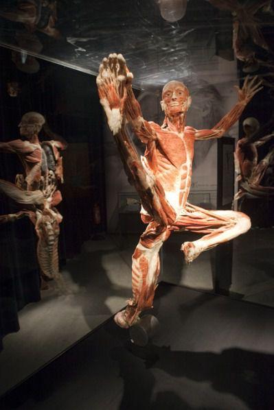 Анатомия тела.