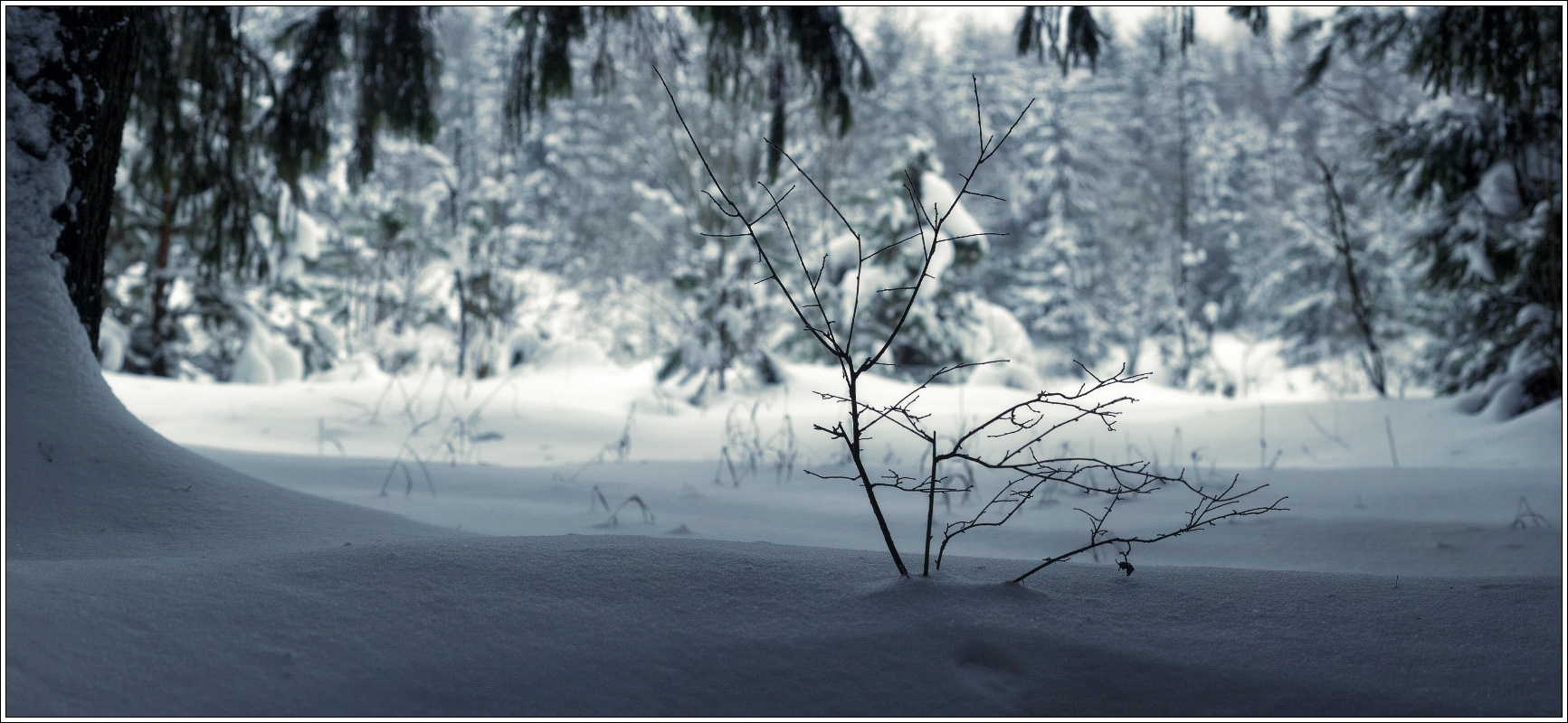 http://i4.imageban.ru/out/2012/01/21/43877aa859624eb3772c0f83f8a4adbc.jpg