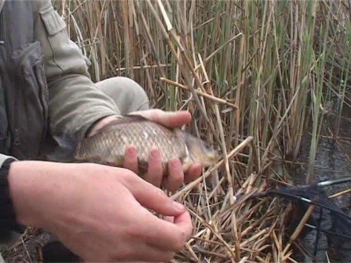 о рыбалке всерьез новые серии