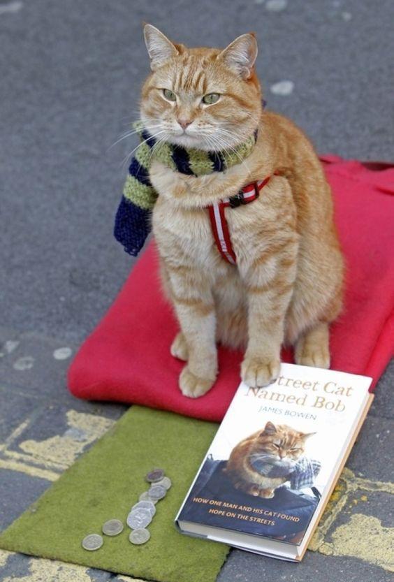 Уличный кот по имени боб скачать на