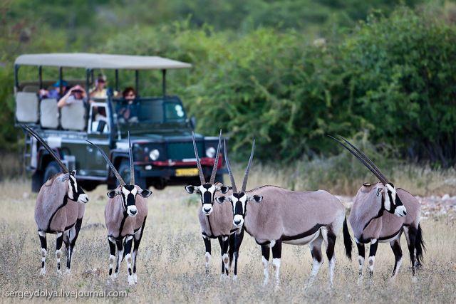 Экспедиция «Открытие Намибии». Сафари