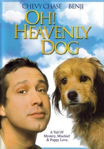 О, божественный пёс 1980 - Андрей Гаврилов