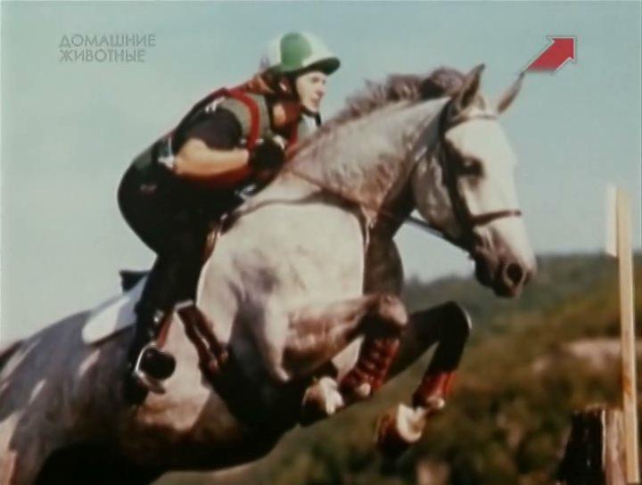 Эти чудесные животные / Animal Miracles (1-45 выпуски) (2002) SATRip