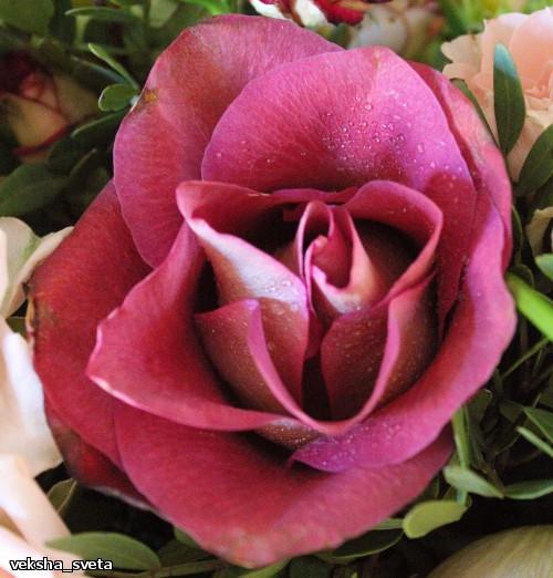 розы4.2.jpg