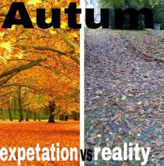 Осень: ожидание и реальность 1