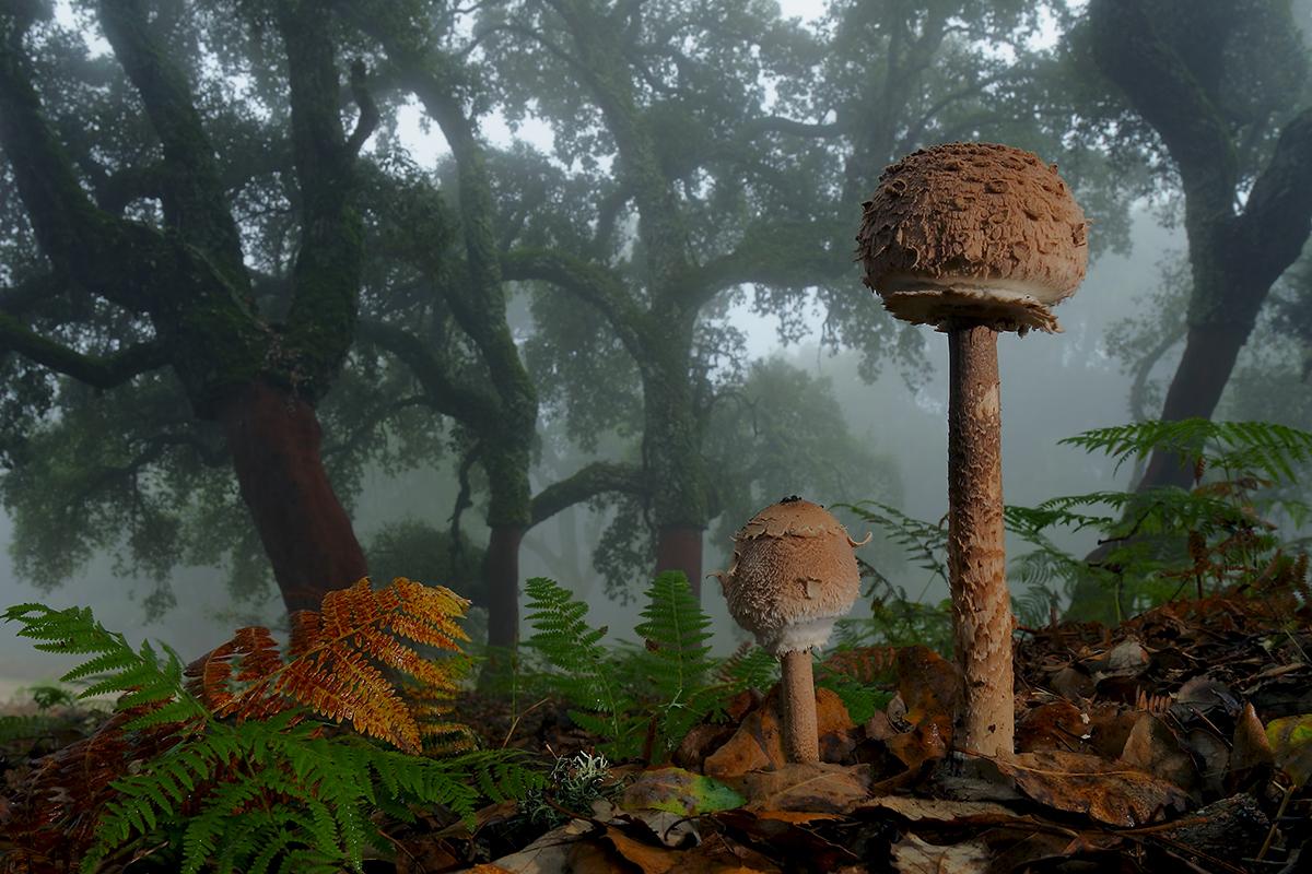 Грибной лес 1