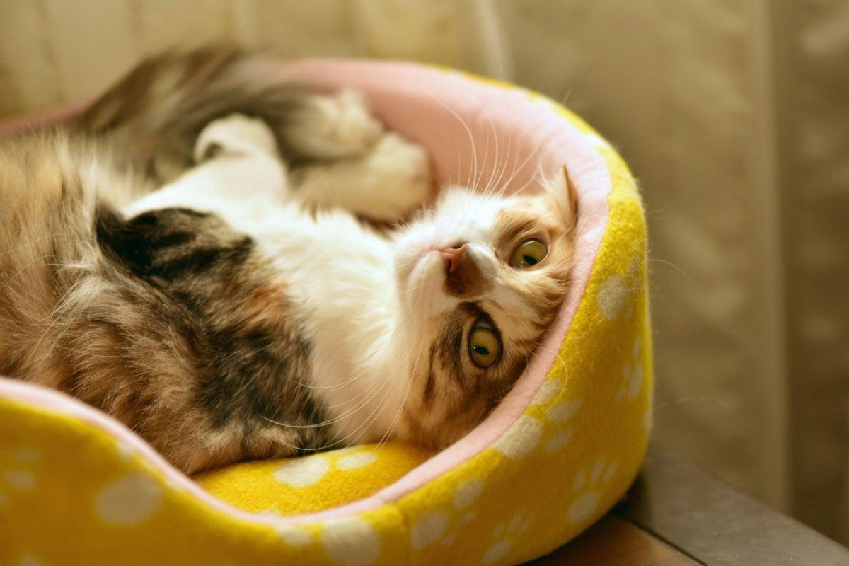 Котейка в гнезде 1