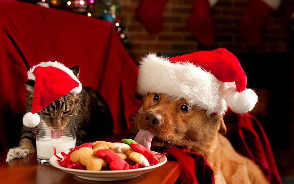 Новый год! Ночь безудержного поедания вкусняшек! 1