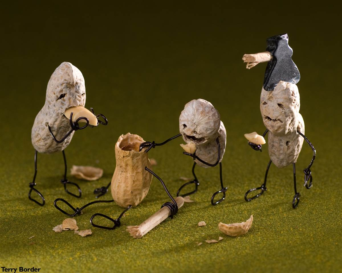Зомби-арт: арахис 1