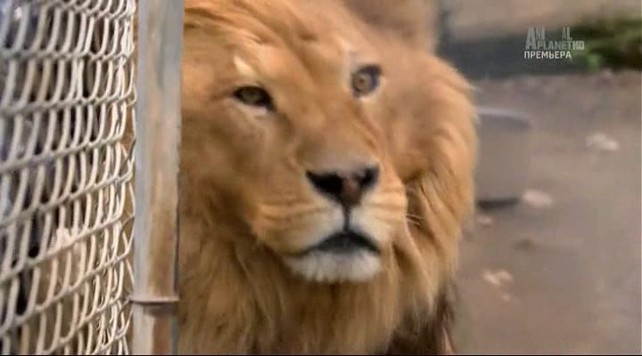 Animal Planet. Джунгли Северной Америки / Yankee jungle (1 серия) (2014) HDTVRip