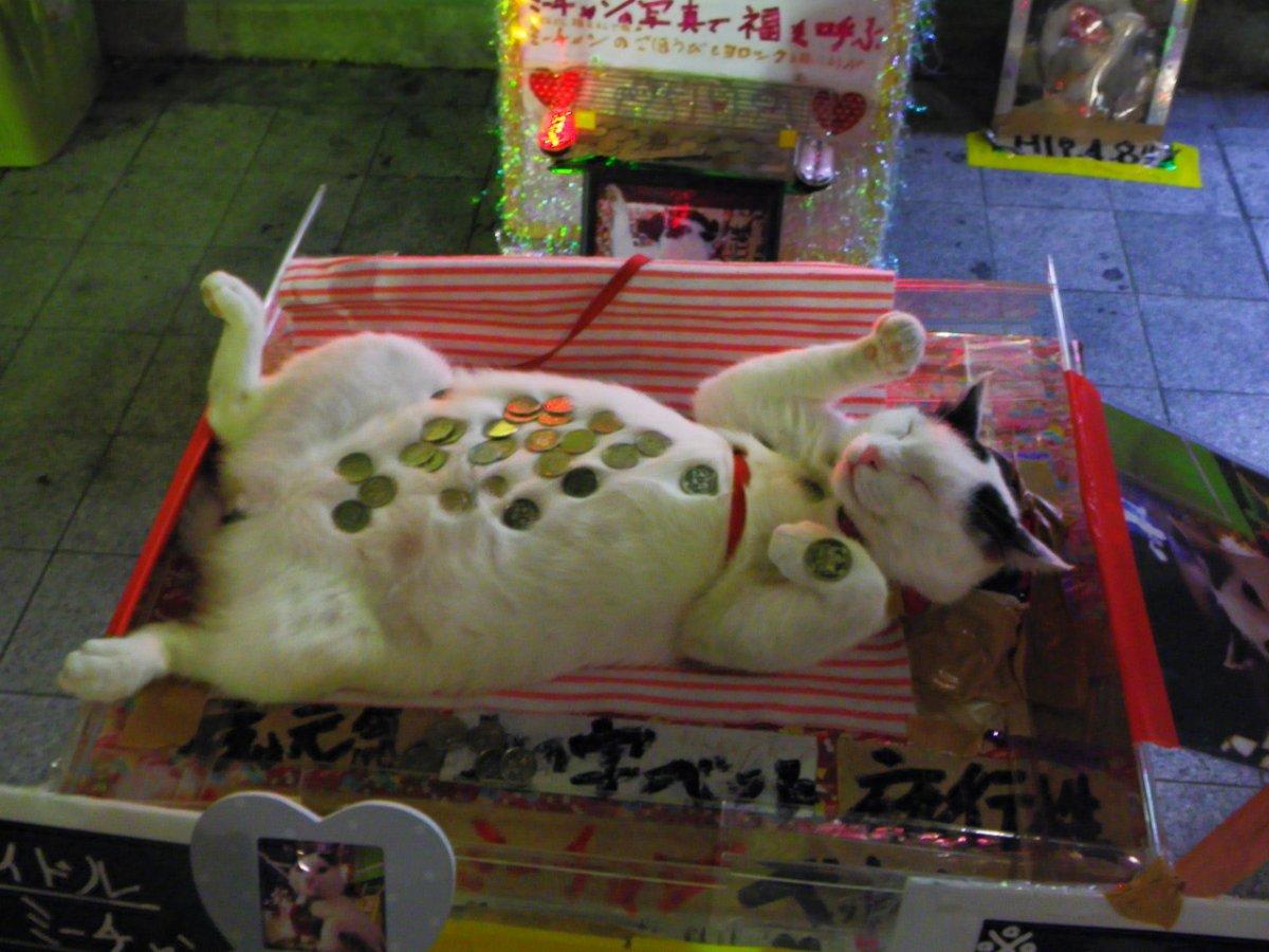 Денежный котейка 1