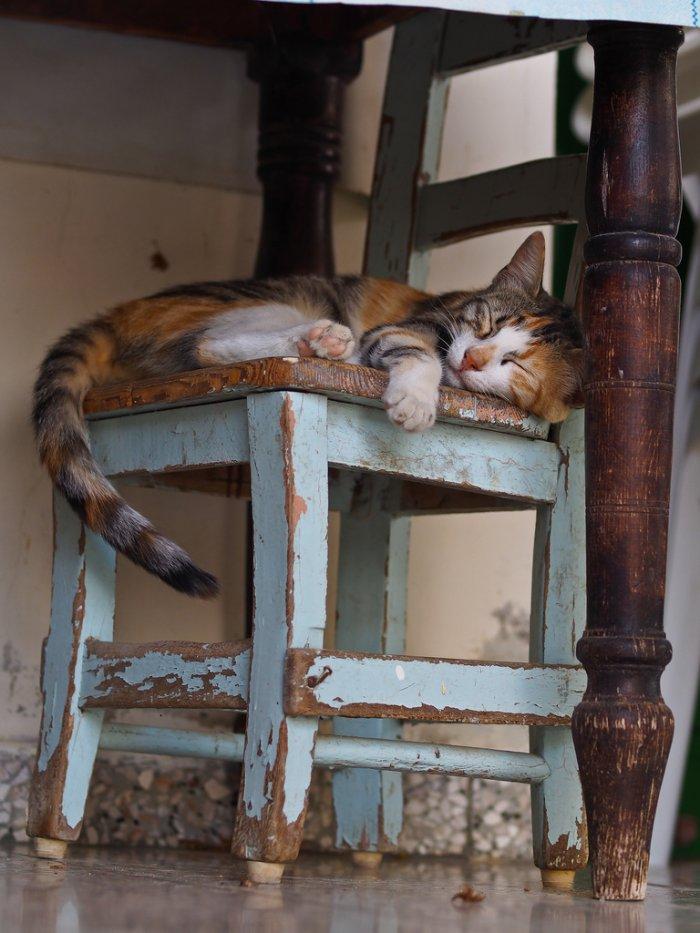 Спящая кошечка 1