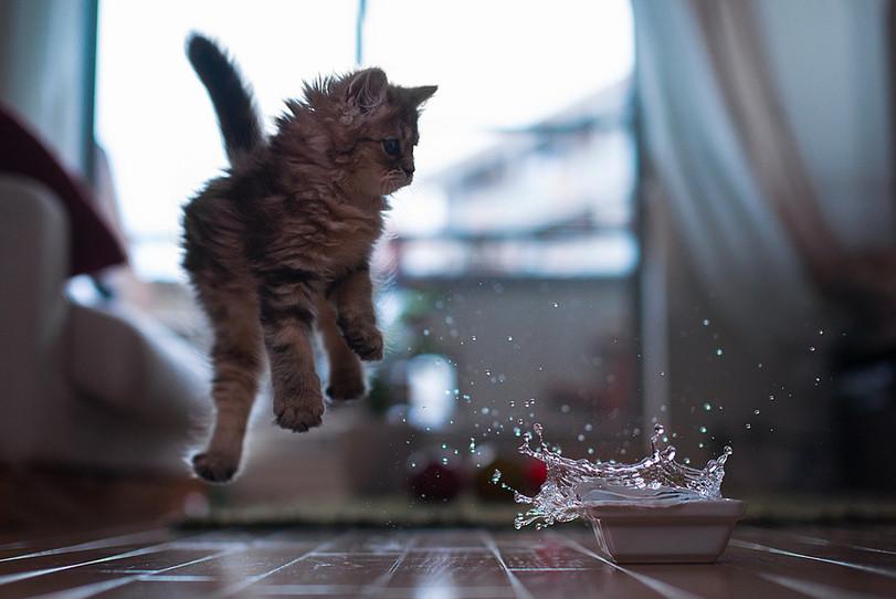 В прыжке 1