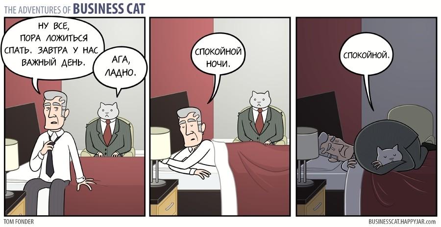 Спокойной ночи, бизнес кот