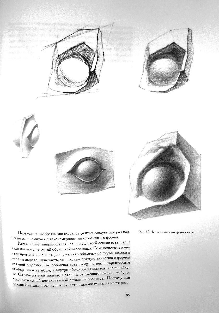 Рисунок основы учебного академического рисунка html