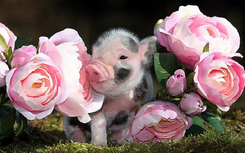 сообщает интерфакс, фото животных с пожеланиями сми часто говорят