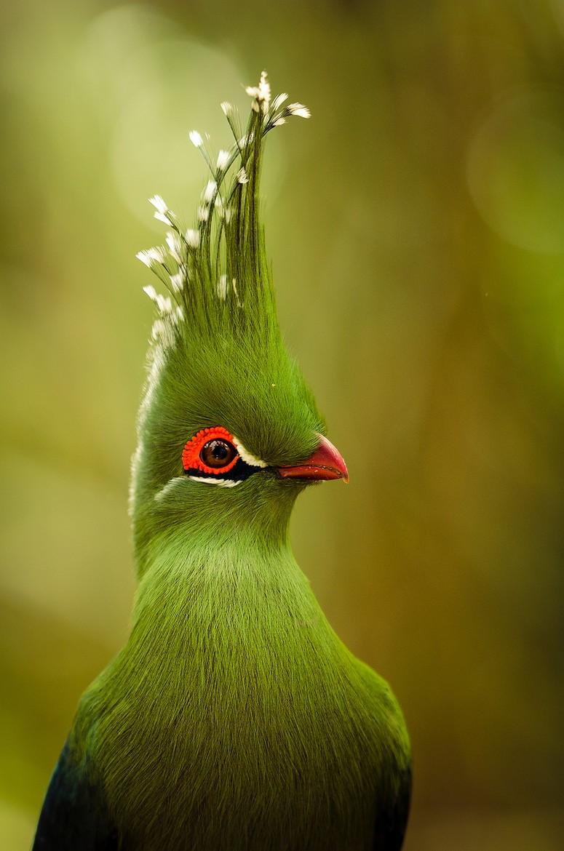 Модная птичка