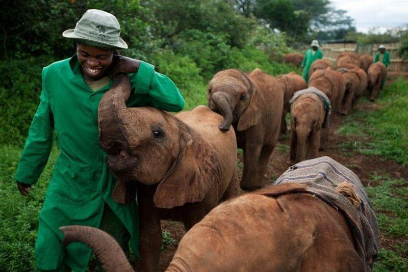 Ферма слонят
