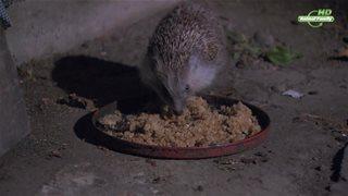 Год из жизни ежа / The Year of the Hedgehog (2009) HDTV (1080i) от Generalfilm