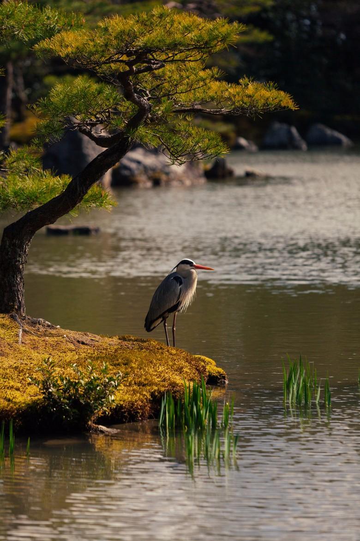 Журавль на берегу озера