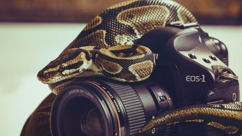 Змей на фотике