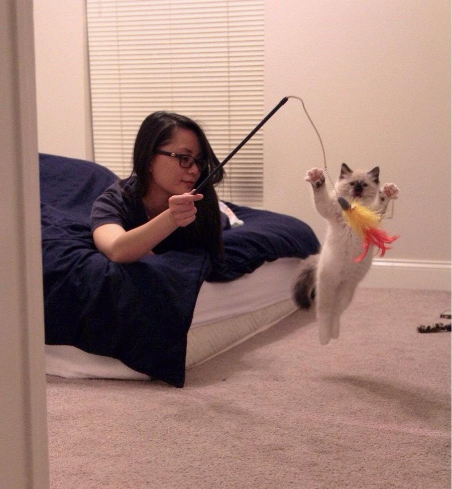 Игры с котенком