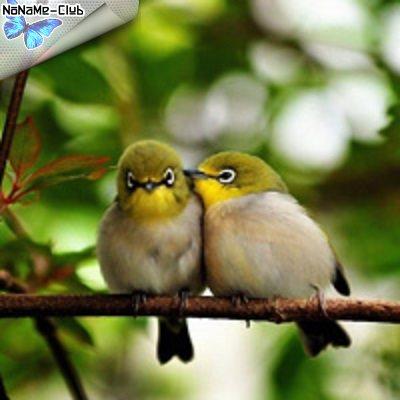 Пение птиц - Пение птиц для детей (2015) [MP3|128 кб/с]<Other>