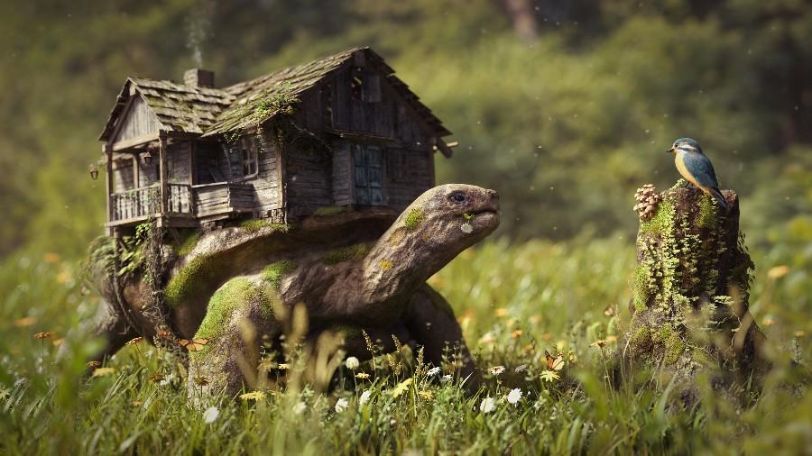 Дом на спине