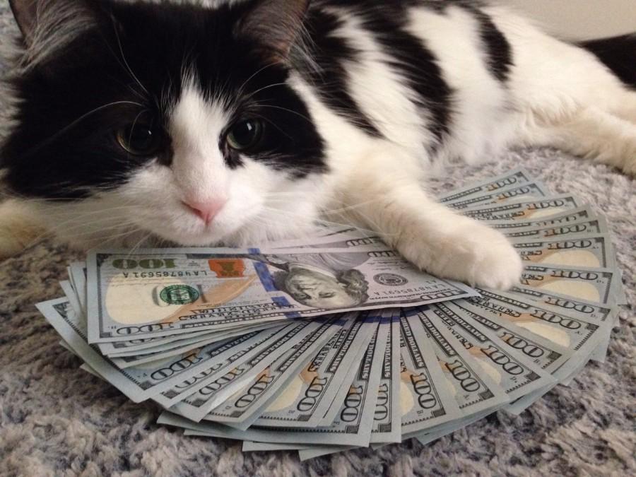 Очень богатый котейка
