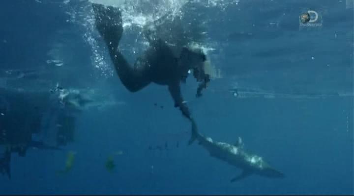 Discovery. Неделя акул / Shark Week (1-10 фильмов из 10) (2015) HDTVRip