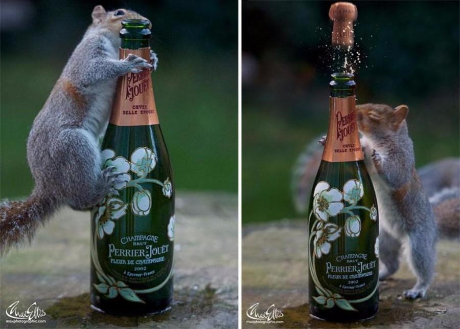 Белка и шампанское