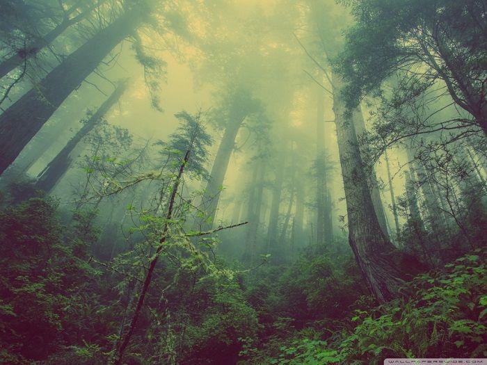 Природа / Лес