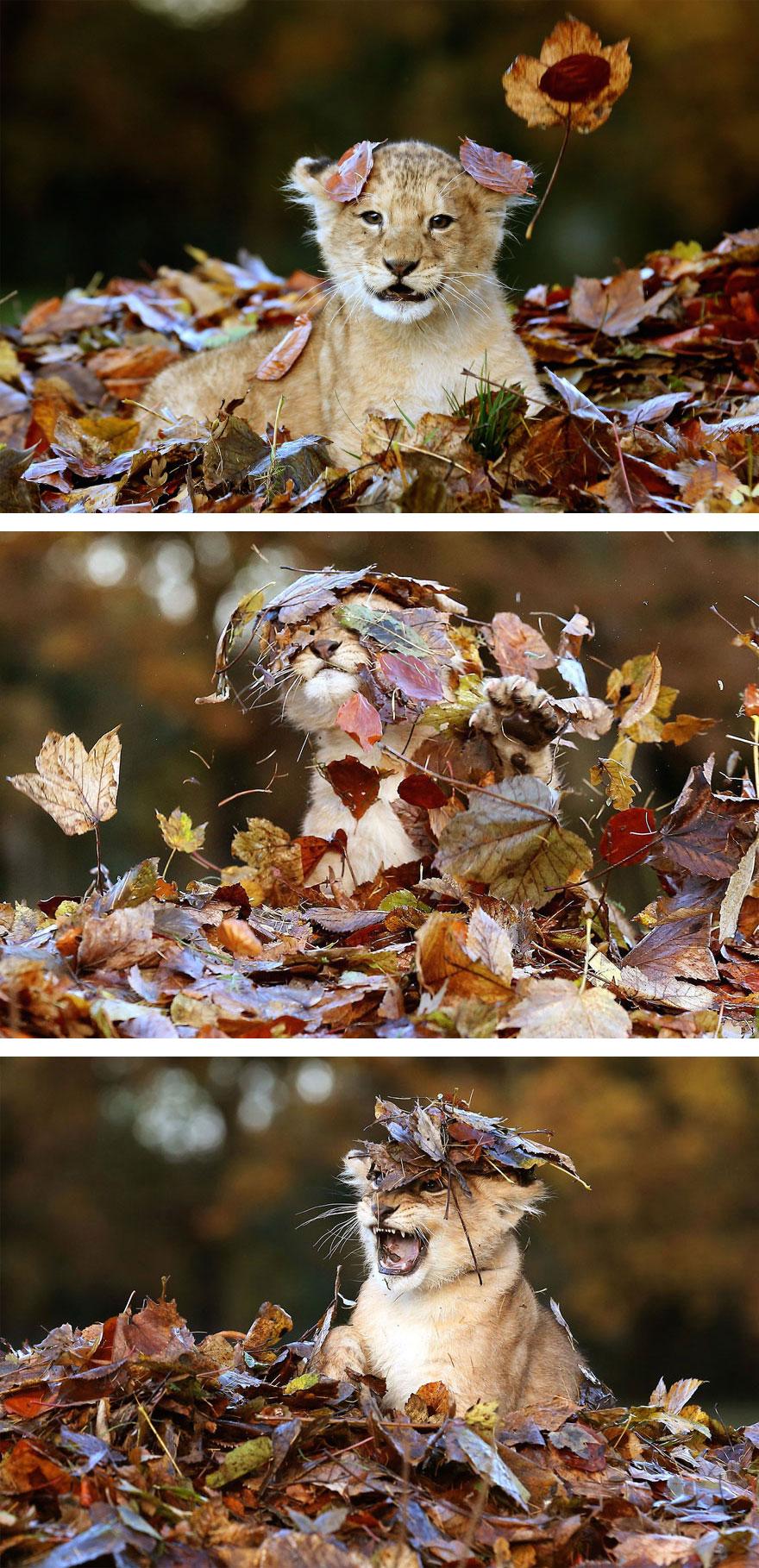 Животные осенью в природе картинки
