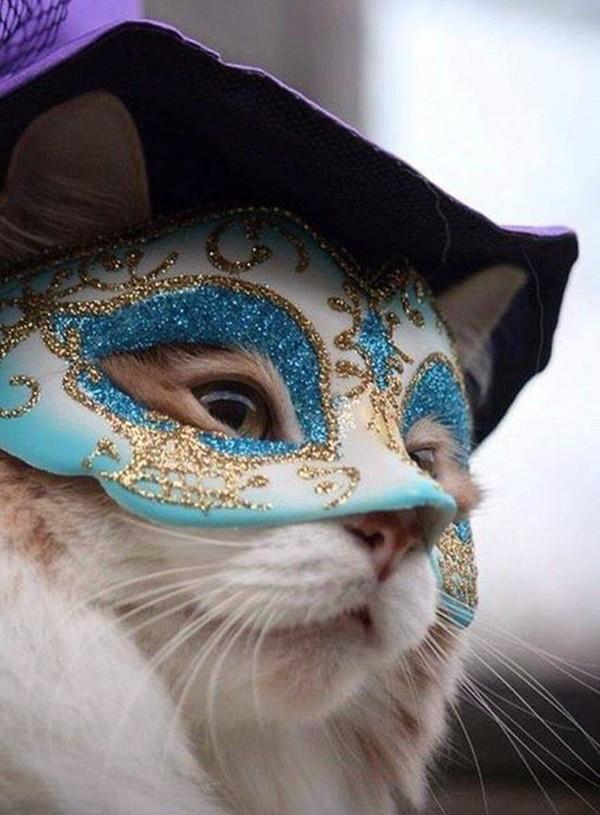 Карнавальный котэ