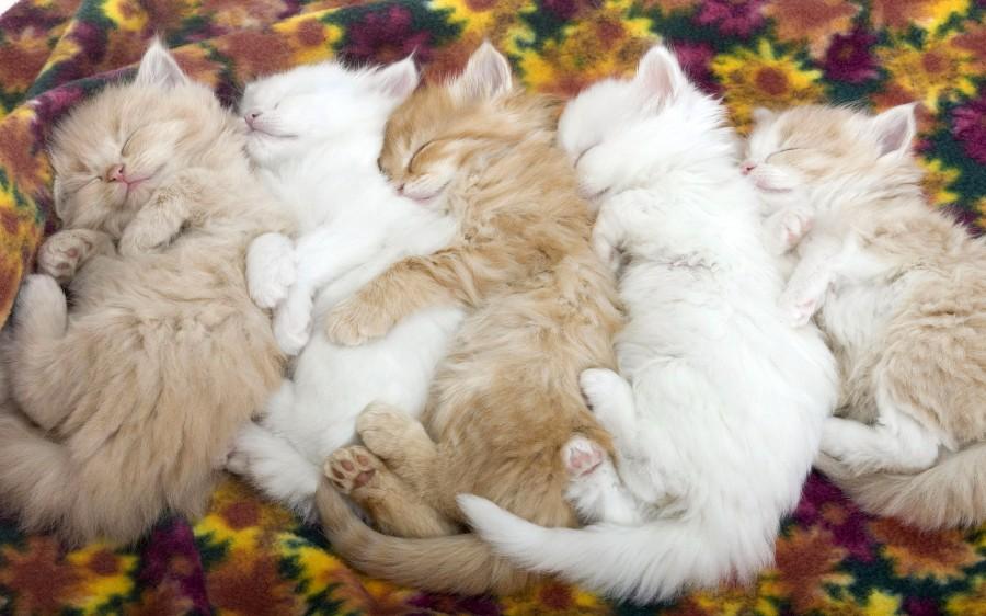 Солнечные котята