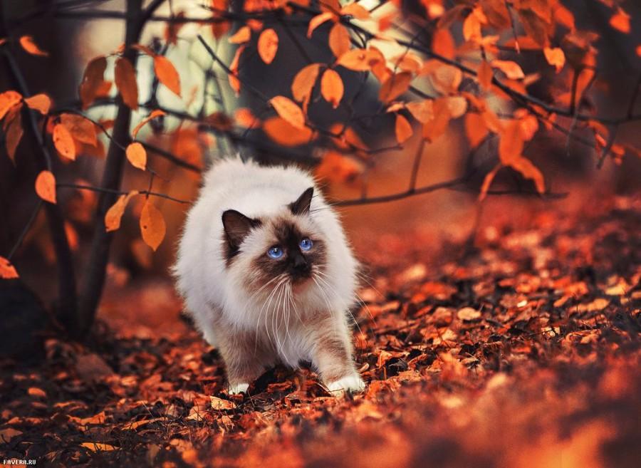 Осенний котейка
