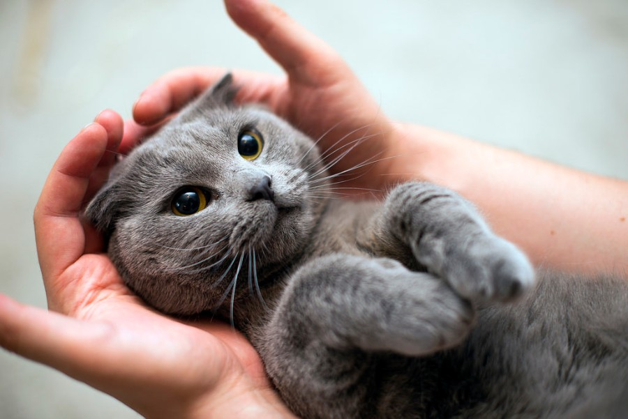 Котейка в руках