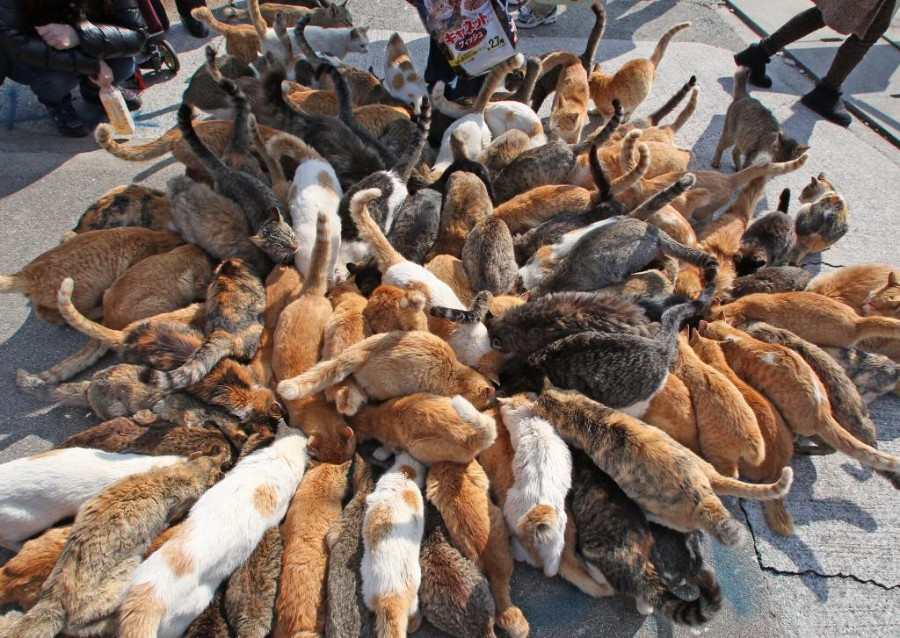 Кормежка на острове кошек