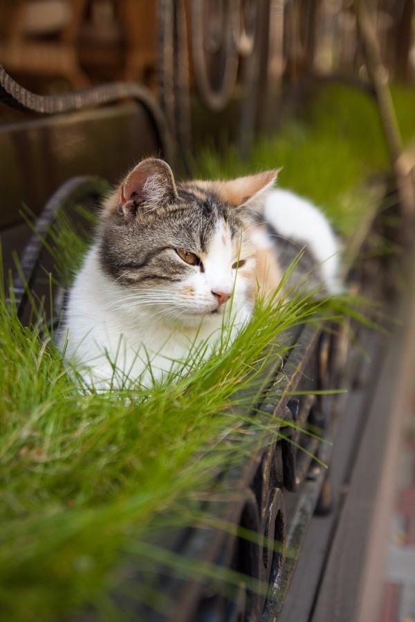 В мягкое траве