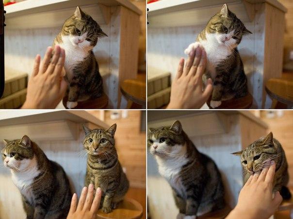 Коты бывают двух типов 1