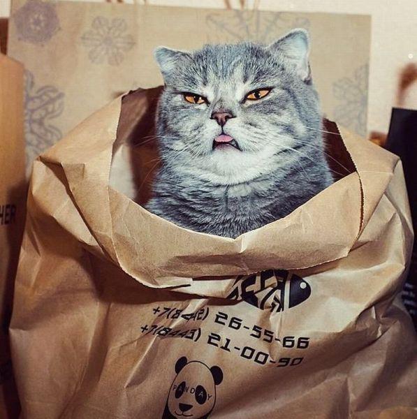 Когда нет ничего вкусного в пакете 1
