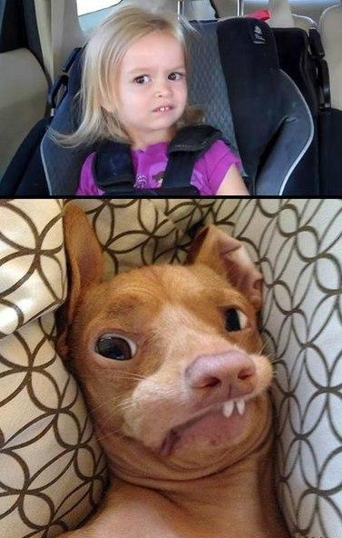 Когда пес похож на хозяев 1